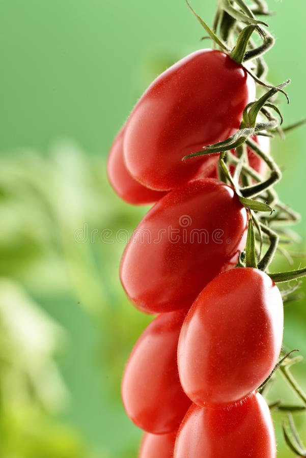 Piccadilly pomidory obraz stock