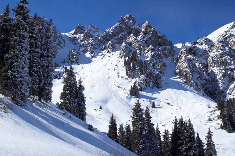Picchi di inverno fotografie stock libere da diritti