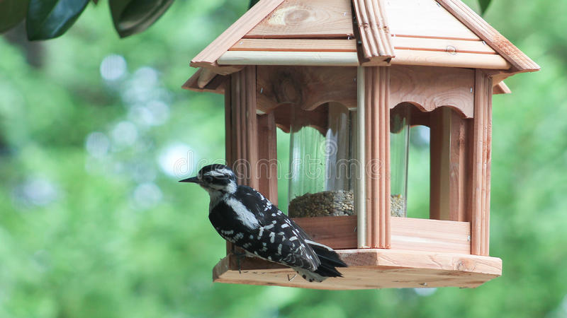 Picchio sull'alimentatore dell'uccello fotografie stock libere da diritti