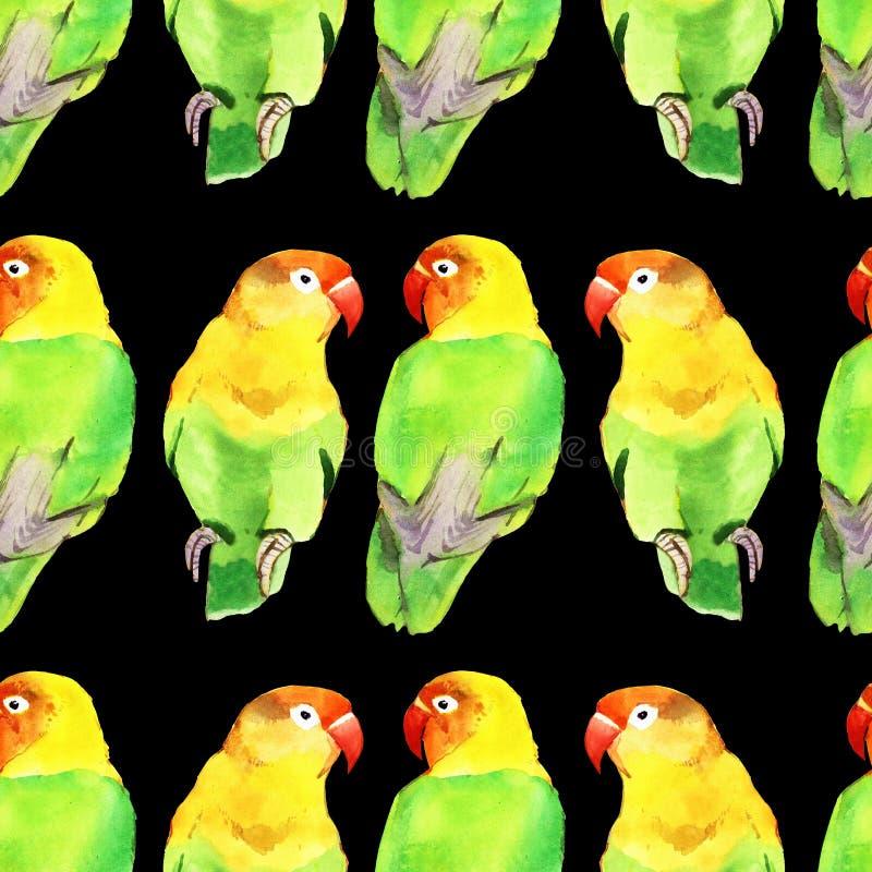 Piccioncino del pappagallo dell'acquerello royalty illustrazione gratis
