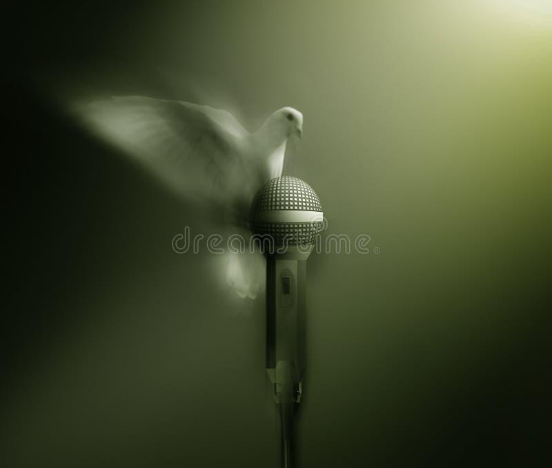 Piccione bianco fotografia stock