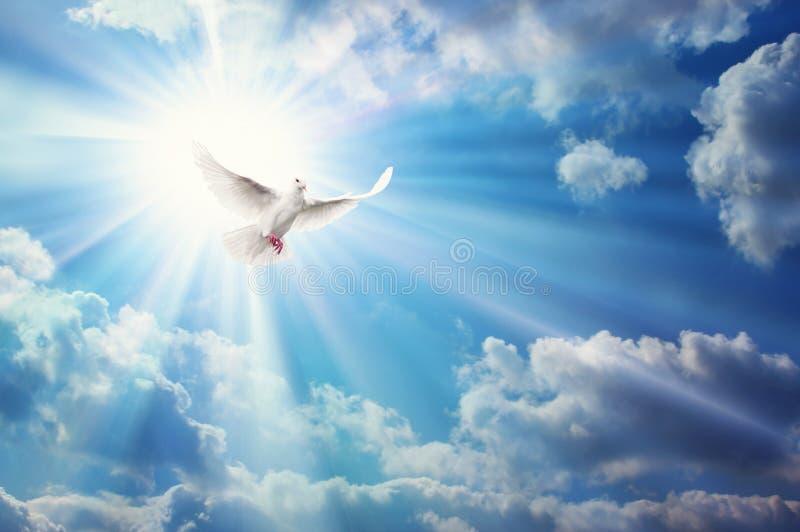 Piccione della libertà, della pace e della spiritualità, colomba bianca nel cielo azzurro fotografie stock