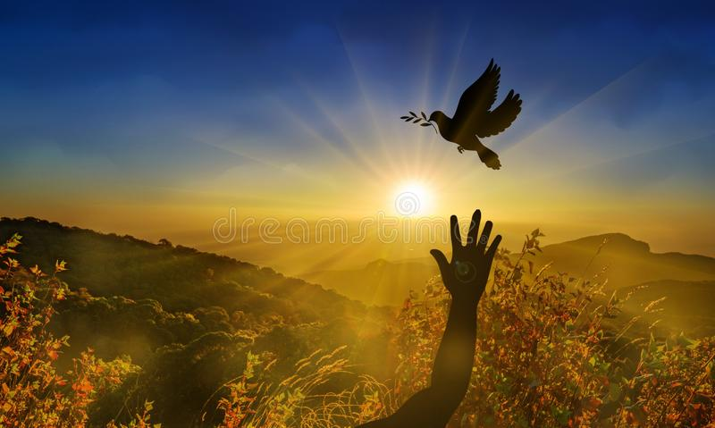 Piccione di libertà, di pace e di spiritualità con ramo di ulivo fotografia stock libera da diritti