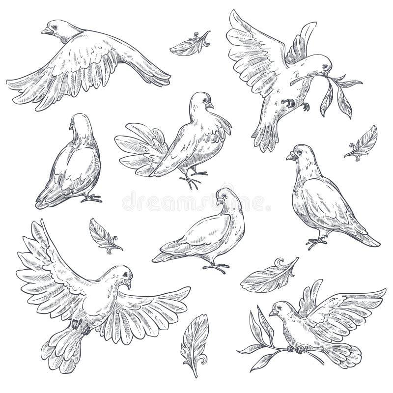 Piccione isolato schizzo di simbolo di pace dell'uccello della colomba illustrazione di stock