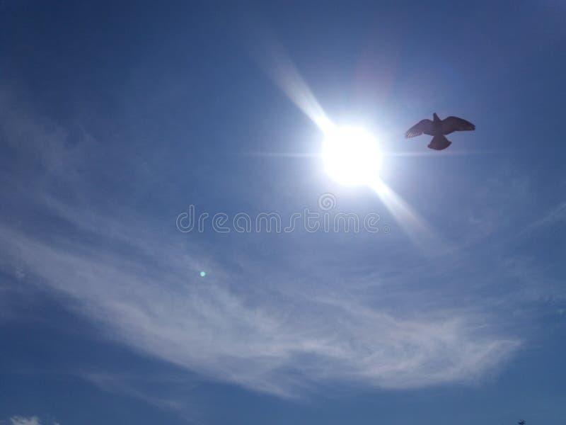 Piccione vicino al Sun immagini stock libere da diritti