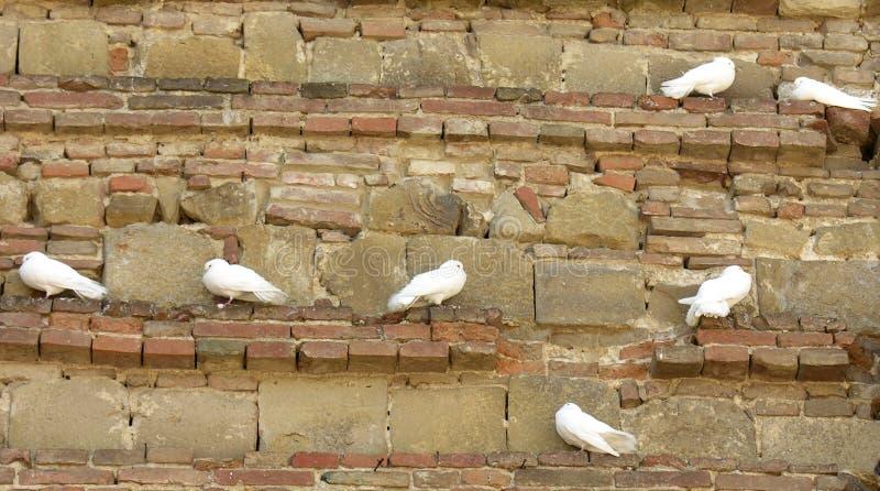 Download Piccioni immagine stock. Immagine di piccioni, parete, moltitudine - 217983