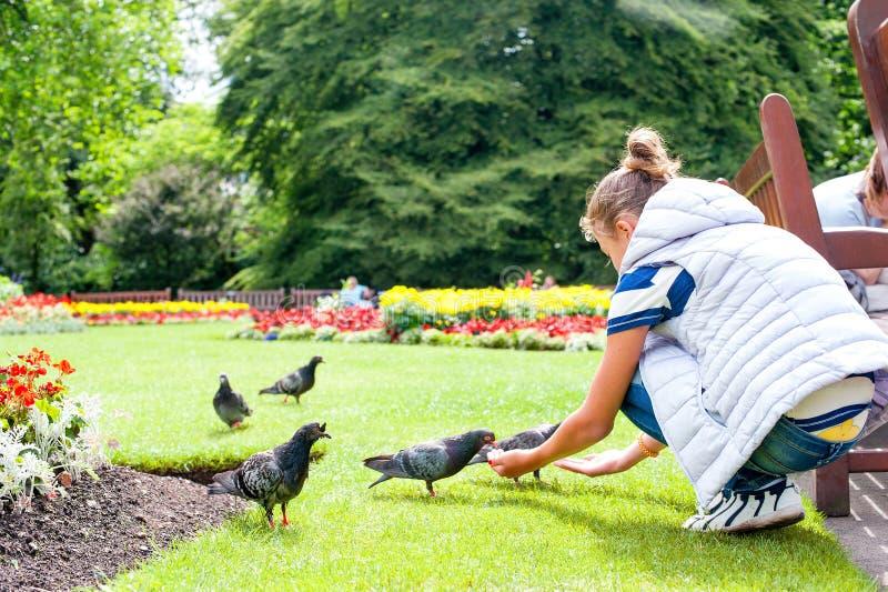 Piccioni d'alimentazione della ragazza nel parco verde di estate fotografie stock