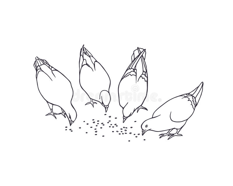 Piccioni disegnati a mano illustrazione di stock
