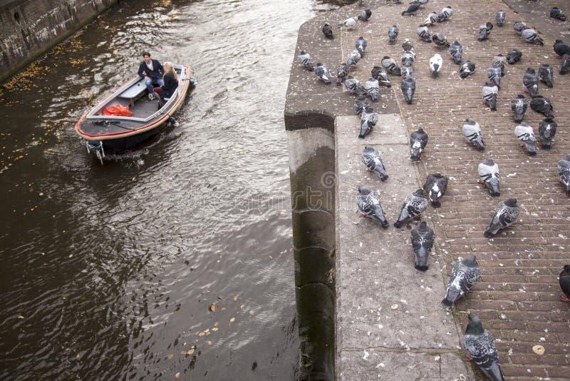 Piccioni e barca in canale di Amsterdam fotografie stock