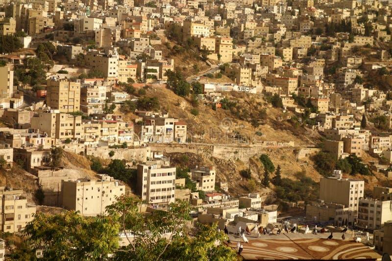 Piccioni giordani immagini stock