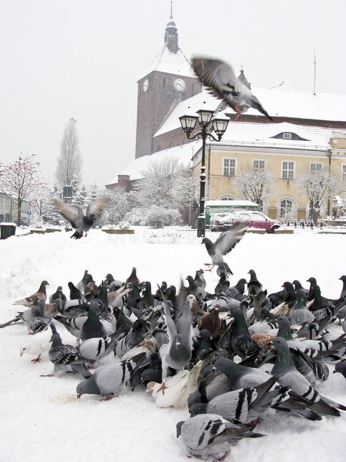 Piccioni nella città di inverno fotografie stock
