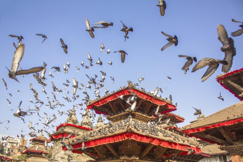 Piccioni vaghi nel moto nel cielo blu sopra le tempie asiatiche di legno antiche Pagoda del tempio fotografie stock libere da diritti