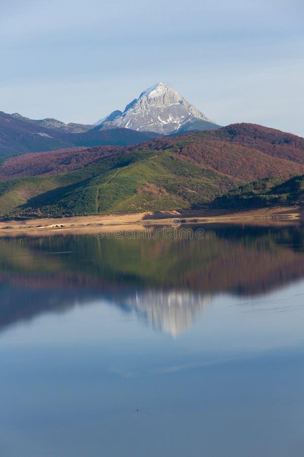 Picco di montagna con neve circondata dalle foreste fotografia stock libera da diritti