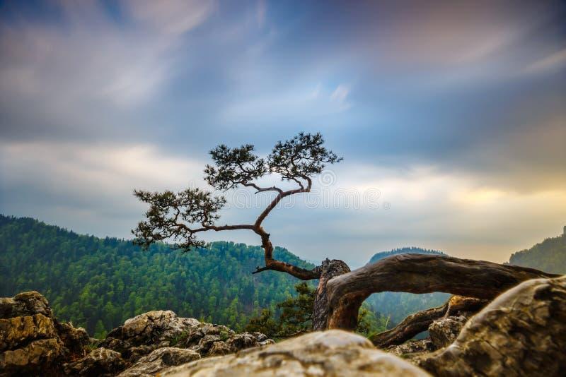 Picco di Sokolica in montagne di Pieniny fotografia stock libera da diritti
