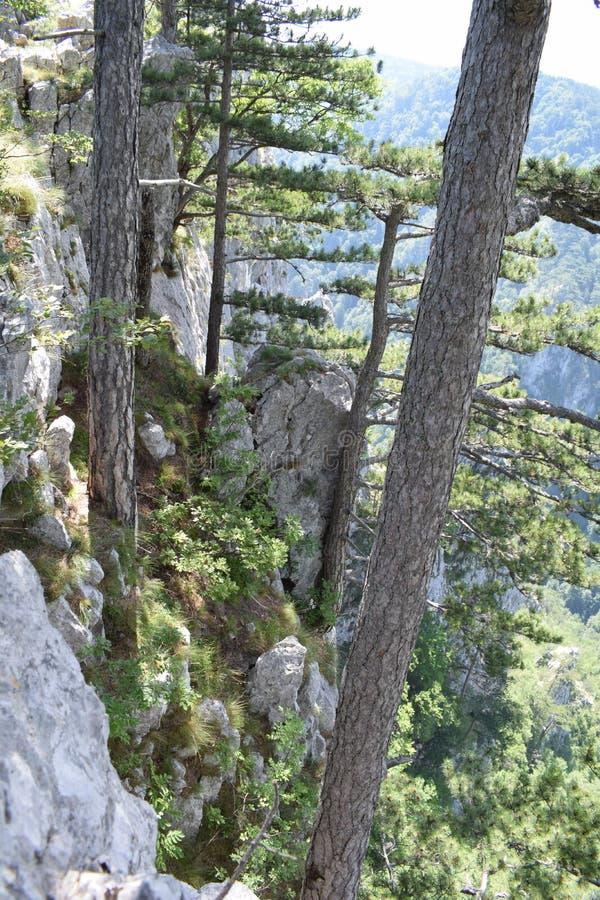 Picco di Sokolina con gli alberi fotografia stock