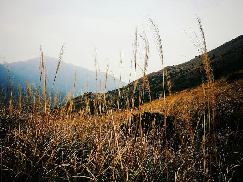Picco dorato di tramonto fotografie stock