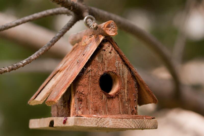 Piccola casa dell'uccello sulla filiale dell'albero di pino immagine stock