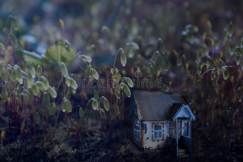 Piccola casa leggiadramente magica in muschio nella luce della luna della foresta alla notte La radura magica favolosa nella fore fotografia stock