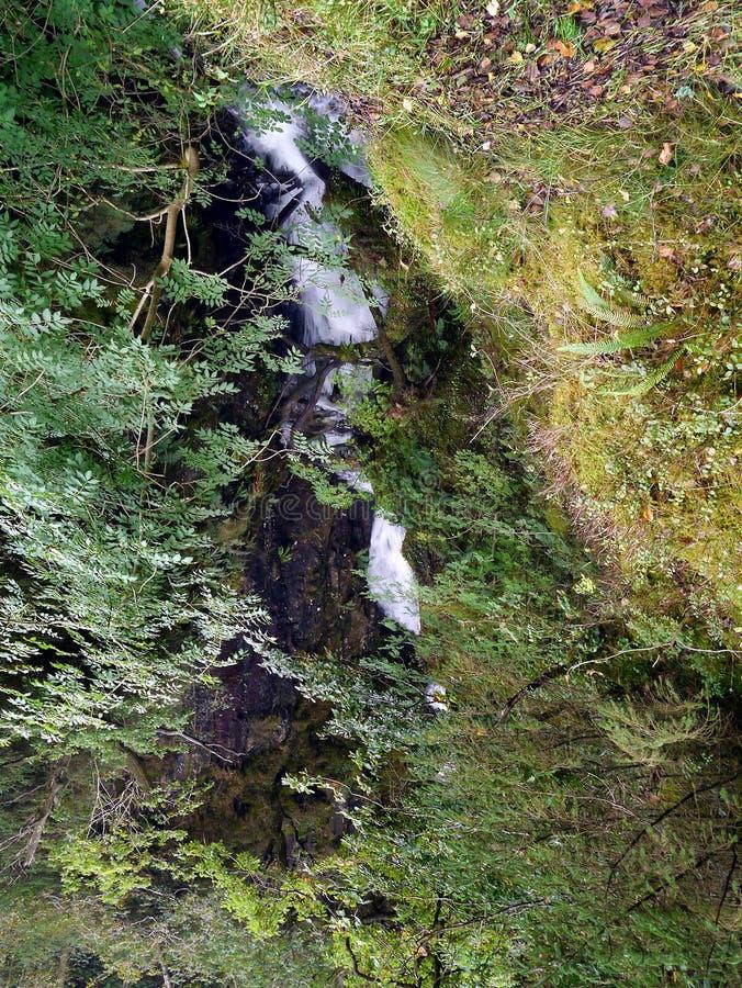 Piccola cascata in foresta fotografie stock libere da diritti