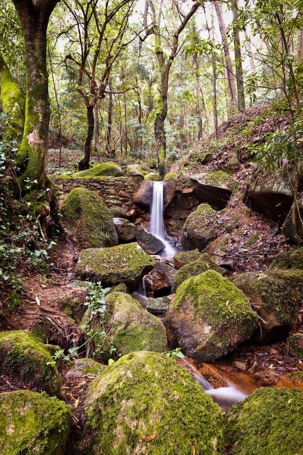 Piccola cascata naturale. immagine stock