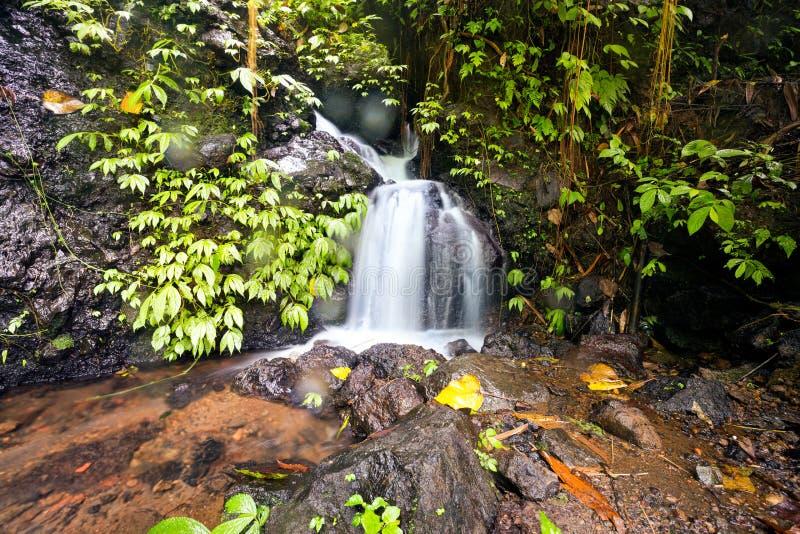 Piccola cascata sulla foresta fotografia stock