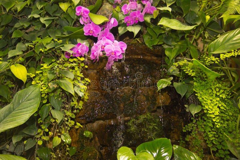 Piccola cascata tropicale fra le piante verdi e le orchidee rosa fotografia stock