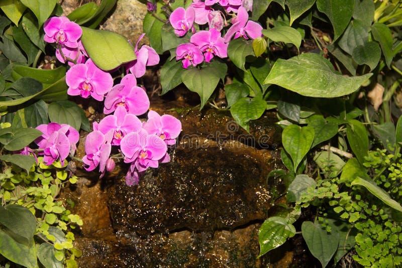 Piccola cascata tropicale fra le piante verdi e le orchidee rosa fotografia stock libera da diritti