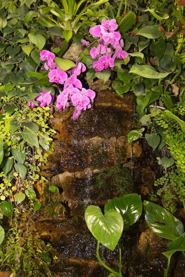 Piccola cascata tropicale fra le piante verdi e le orchidee rosa immagini stock