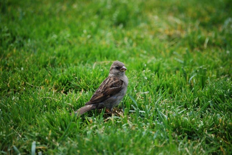 Piccola fine dell'uccello in su fotografia stock