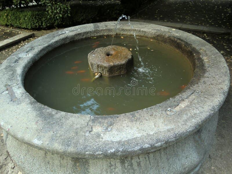 Piccola fontana di pietra con il mucchio di acqua oscura e del pesce fotografia stock libera da diritti