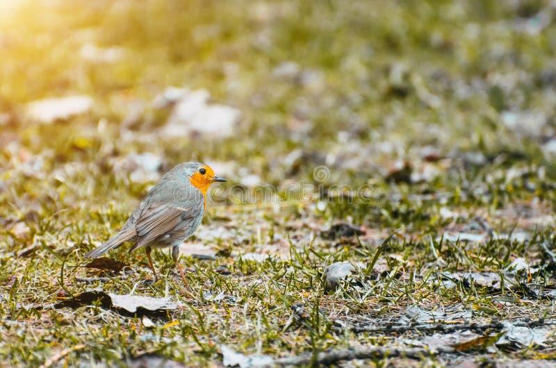 Piccola foresta dell'uccello in primavera sulla terra fotografie stock libere da diritti