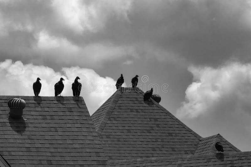 Piccola moltitudine di poiane sul tetto della casa fotografie stock