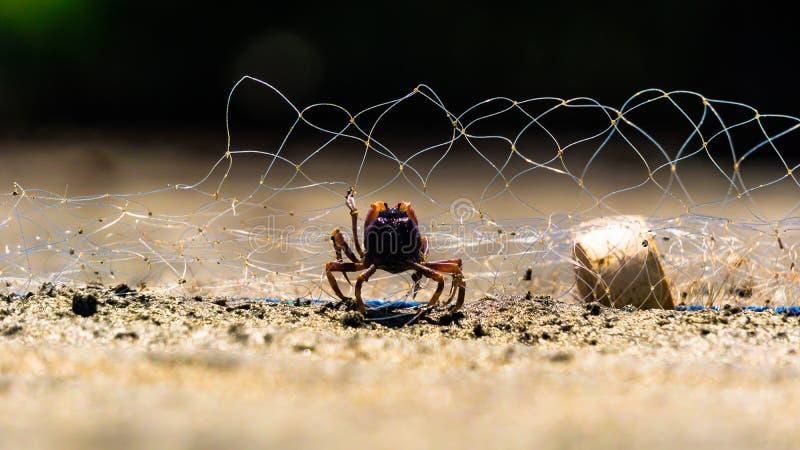 Piccola nassa per granchi nella rete del pescatore fotografia stock libera da diritti