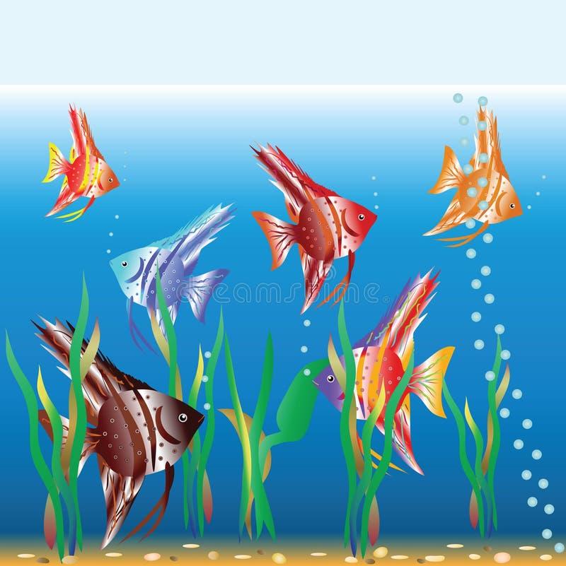 Piccola nuotata eterogenea dei pesci in un acquario immagine stock libera da diritti