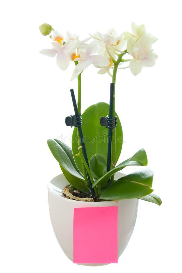 Piccola orchidea in vaso da fiori con un documento in for Fiori da vaso