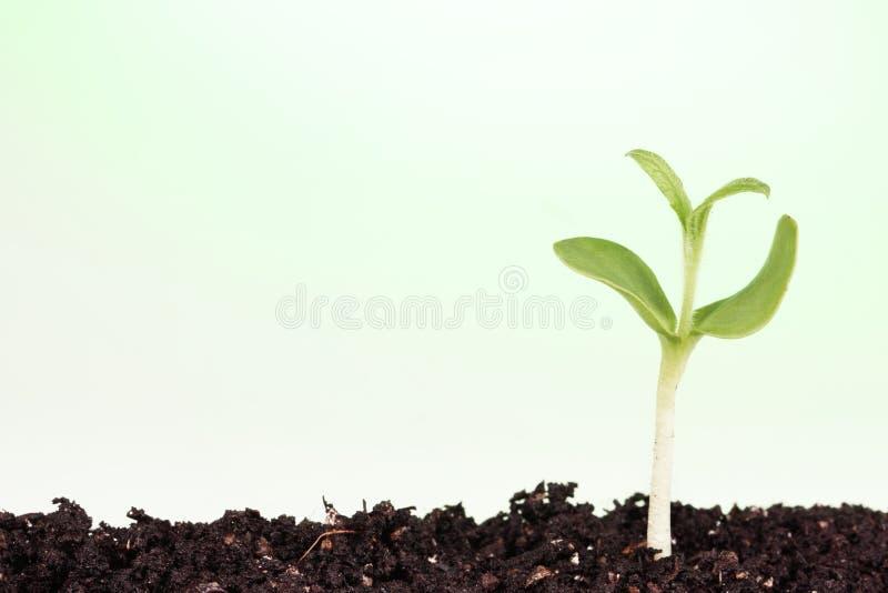 Piccola pianta immagine stock