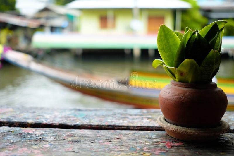 Piccola pianta in Clay Pot al forno sulla Tabella di legno fotografie stock