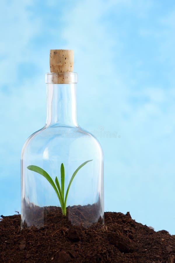 Piccola pianta in terreno fotografie stock