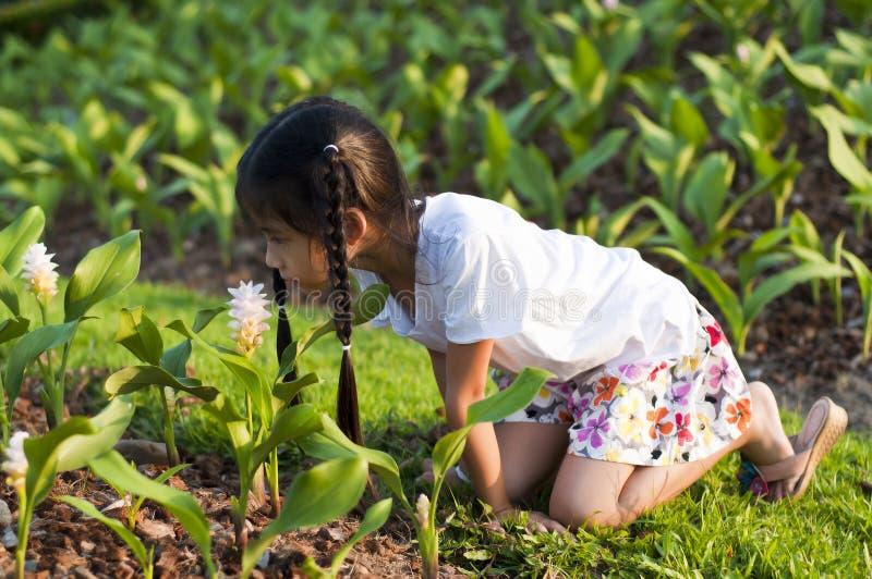 Piccola ragazza asiatica che odora un fiore. fotografia stock