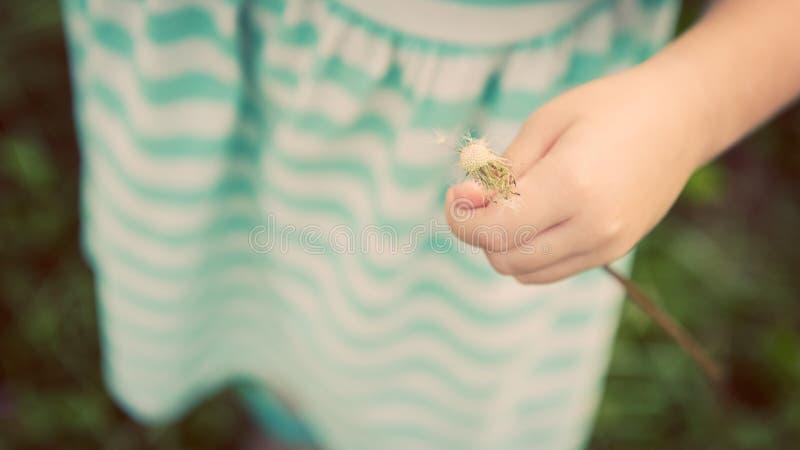 Piccola ragazza bionda adorabile con il fiore del dente di leone fotografia stock