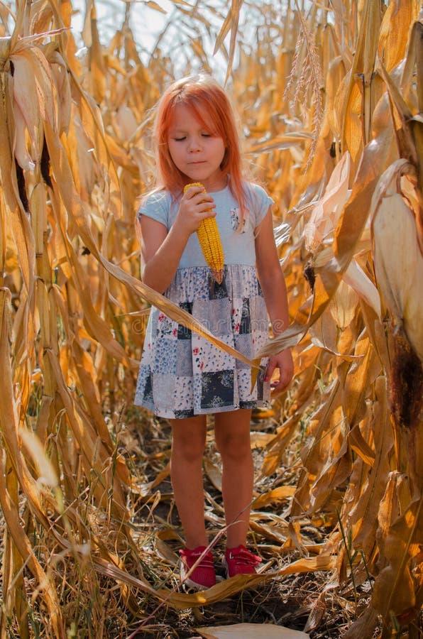 Piccola ragazza caucasica di sei anni sull'azienda agricola Ragazza sveglia felice con cereale Stagione della raccolta immagini stock libere da diritti