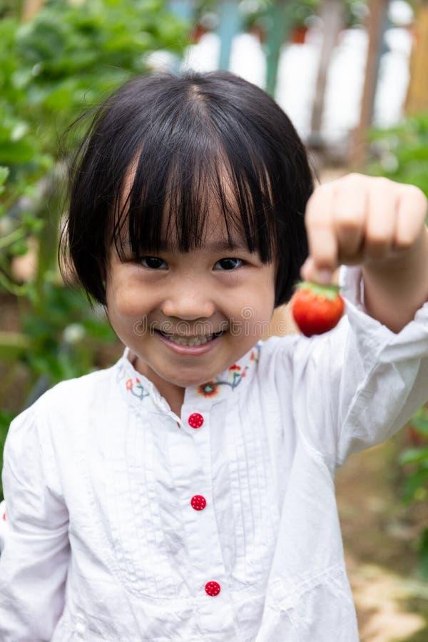 Piccola ragazza cinese asiatica che seleziona fragola fresca fotografie stock libere da diritti
