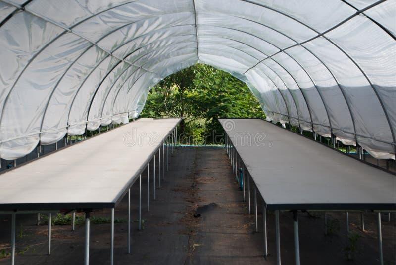 Piccola tenda vuota della scuola materna della pianta del cactus al cactus differente dell'azienda agricola fotografia stock