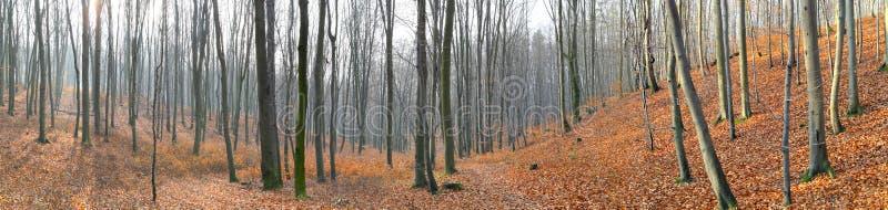Piccola valle nella foresta del faggio di autunno fotografie stock libere da diritti