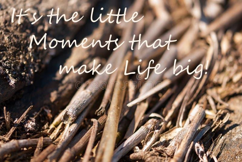 Piccola vita di momenti del fondo di bambù grande immagine stock