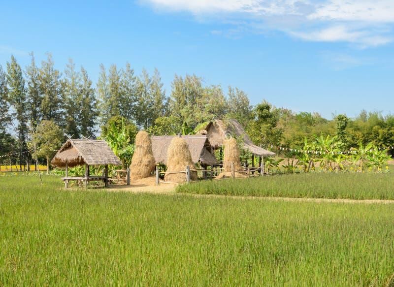 piccole capanne nel campo di risaia immagine stock