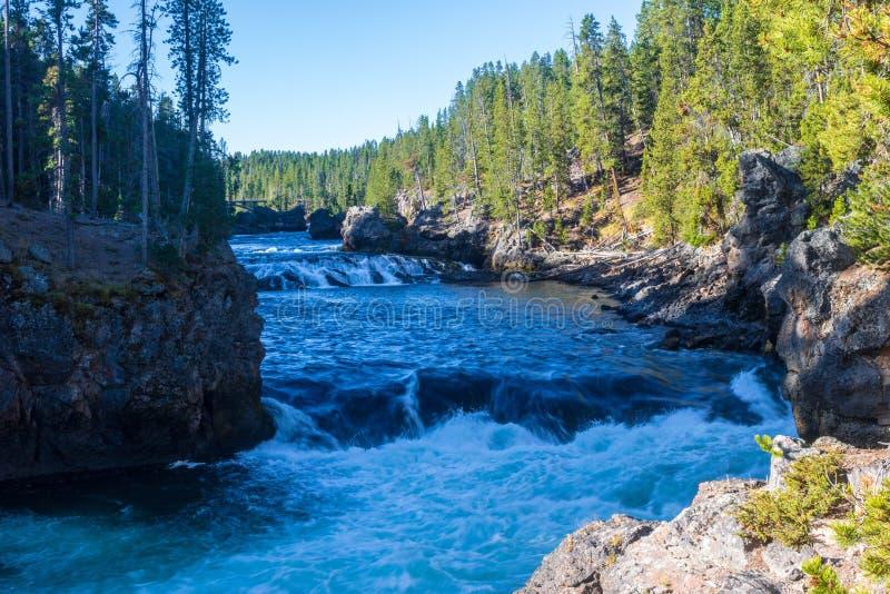 Piccole cascate nel fiume Yellowstone fotografia stock