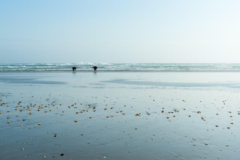 Piccole figure a distanza dei collettori dei crostacei sull'ampia sabbia piana dal mare immagini stock libere da diritti