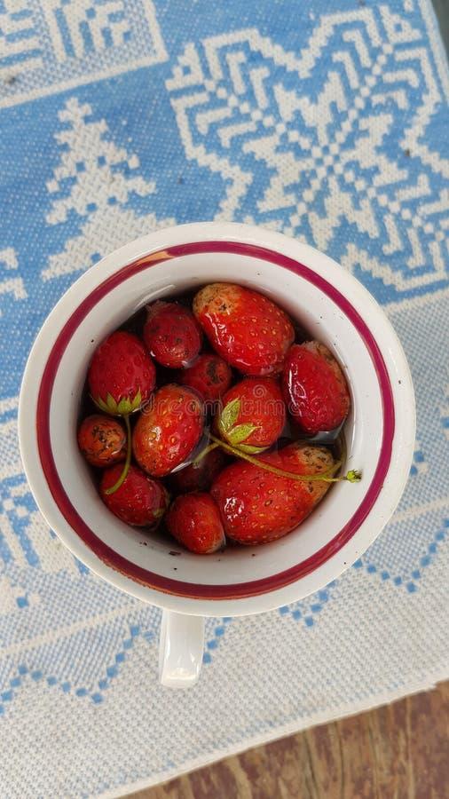 Piccole fragole rosse organiche con i gambi verdi nella tazza di acqua fotografie stock libere da diritti