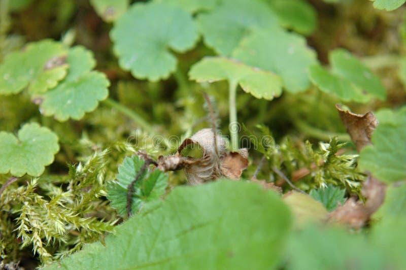 Piccole piante, tappeto verde nel giardino immagine stock libera da diritti